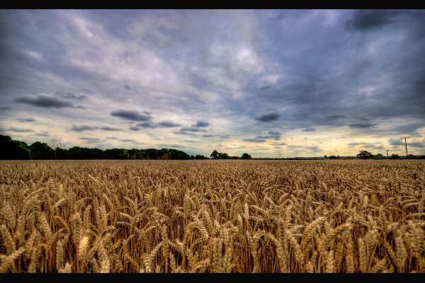 La Mise A Disposition Des Terres Agricoles Hors Bail Rural