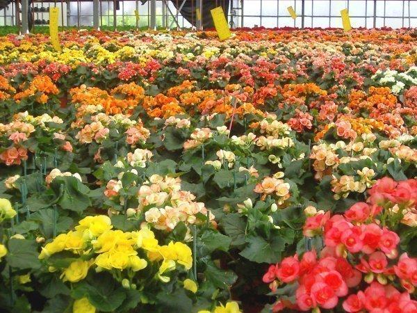 Horticulture