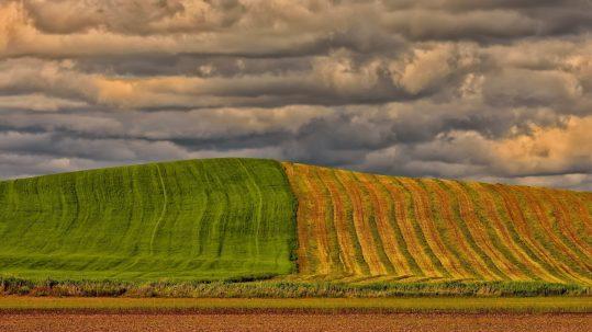 foncier agricole