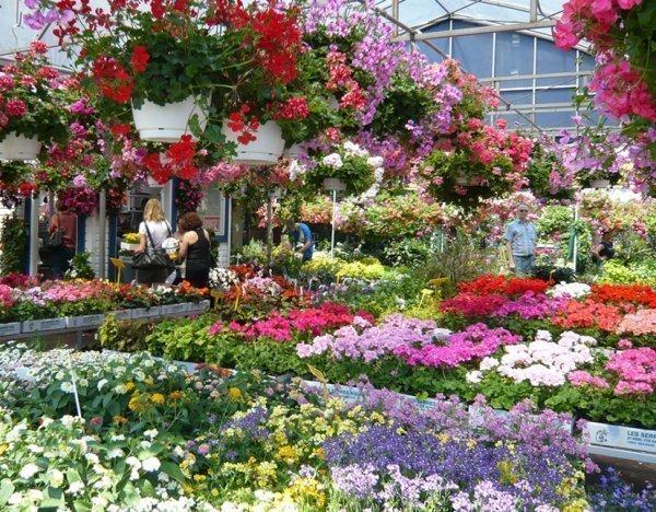 magasin fleurs