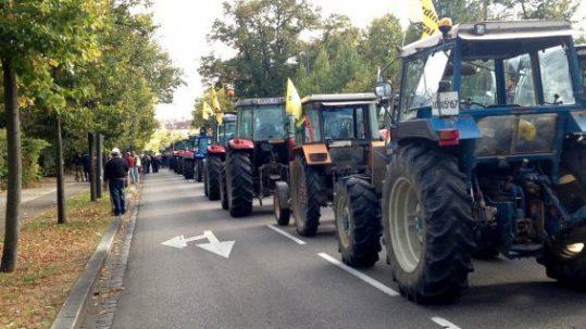 Manifestation anti GCO