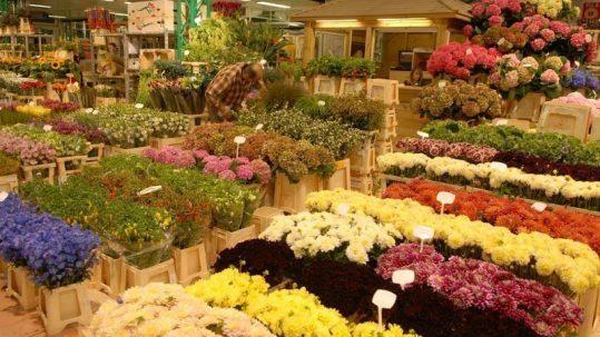 fleurs étiquetage passeport phytosanitaire
