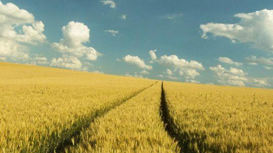 Crise agricole : que puis-je faire ?