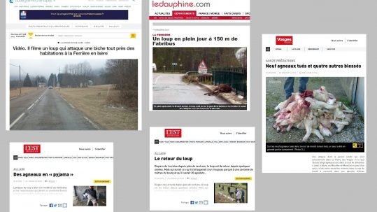 loup articles