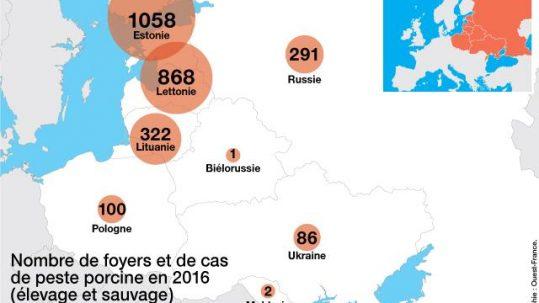 Peste porcine - ©Infographie Ouest France