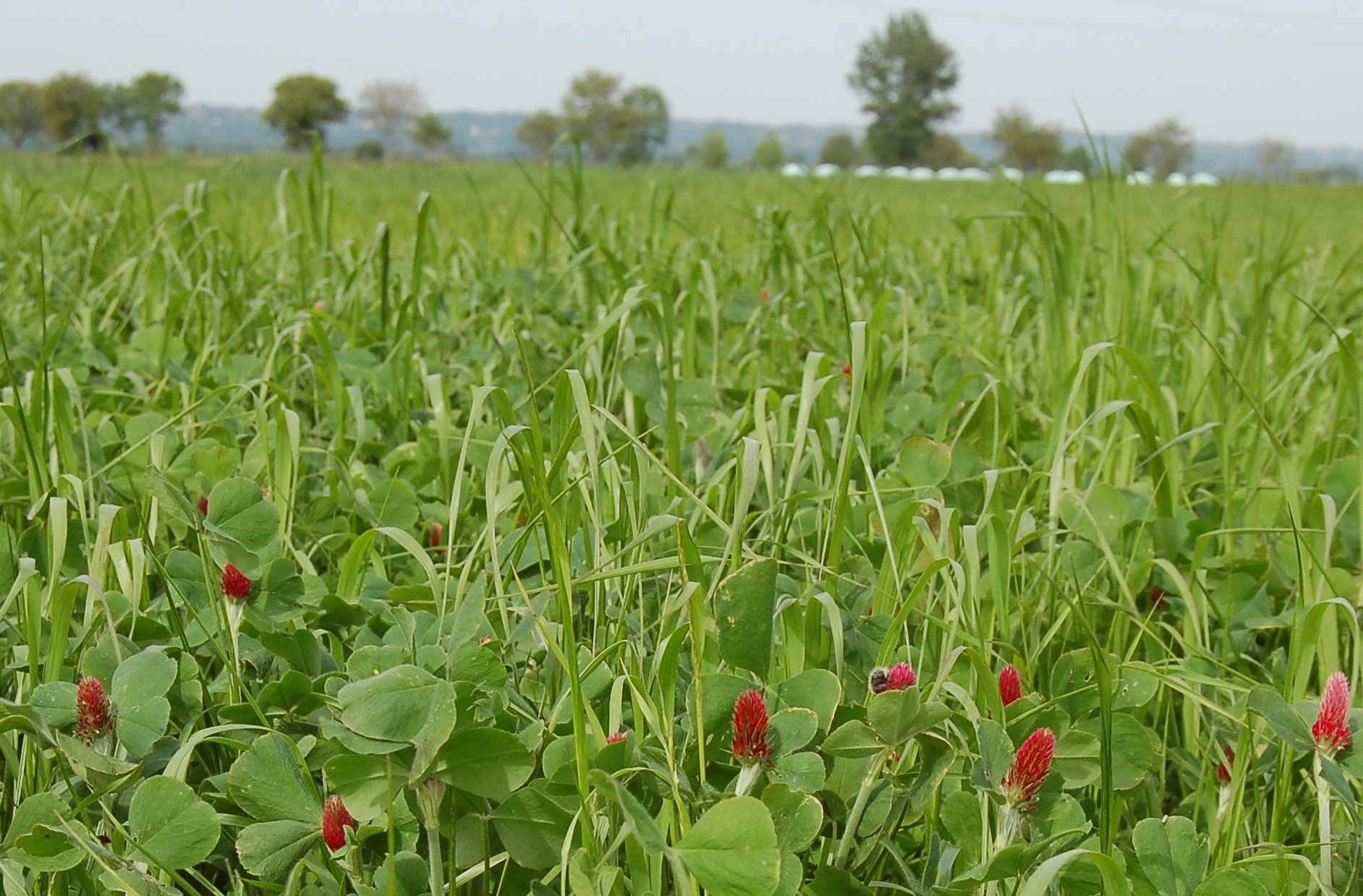 Indemnisation semences de prairie dégâts de gibier