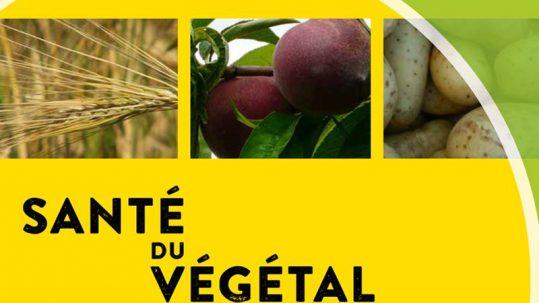 santé du végétal