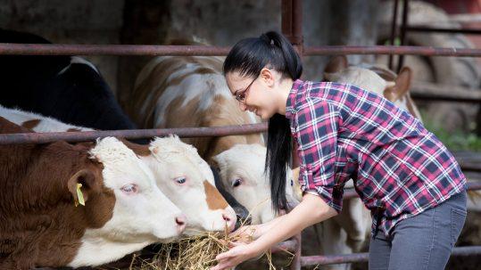 Jeune éleveuse et ses vaches