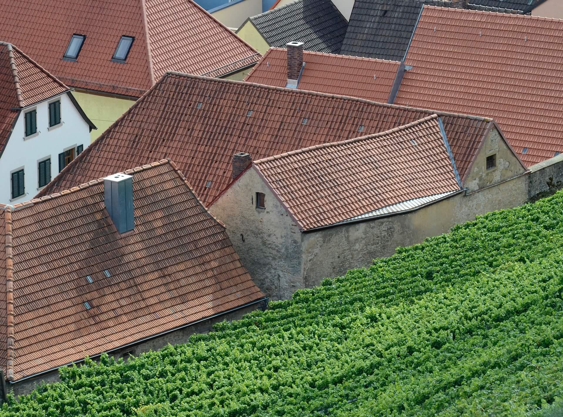Vignoble à proximité d'habitations