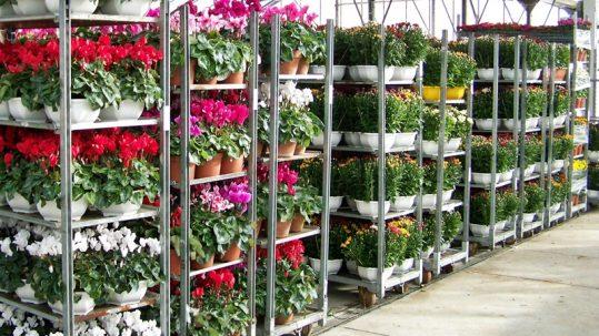fleurs passeport phytosanitaire