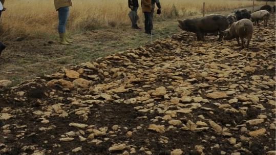 effluents d'élevage