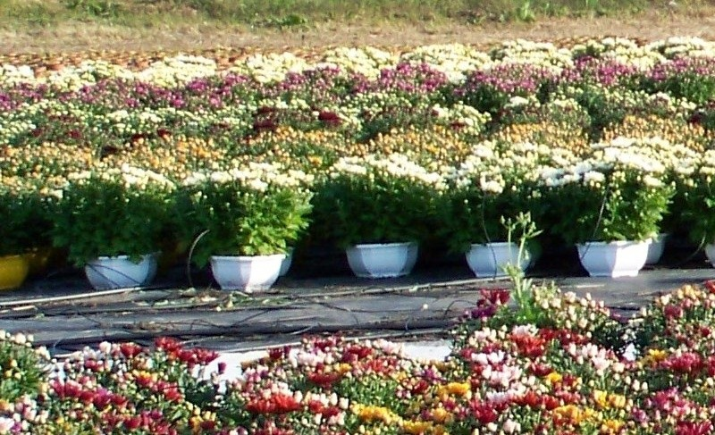 Production2 Fleurs Pots en plastique