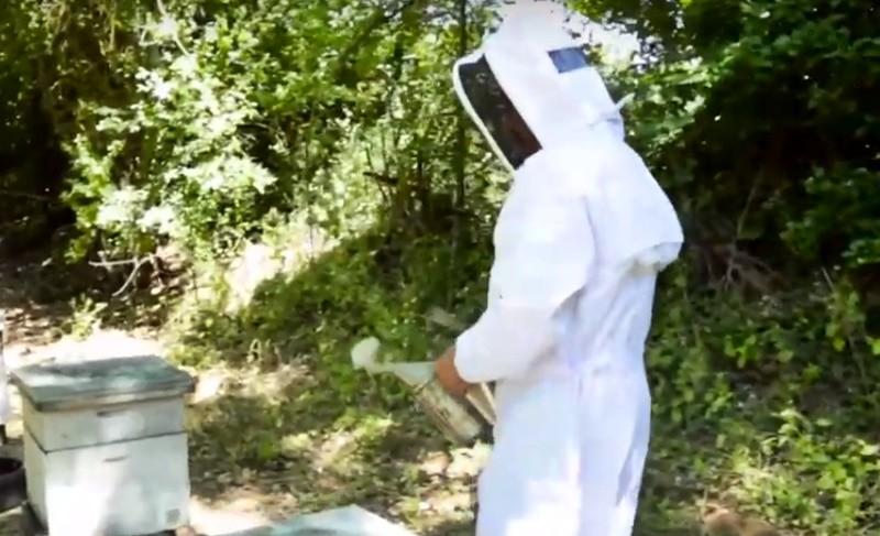 apiculture apiculteur ruches