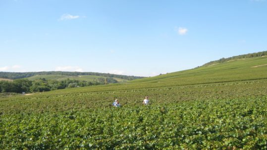 Travaux vignes