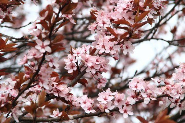 Arboriculture fleurs