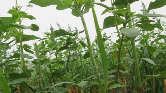 couvert vegetal