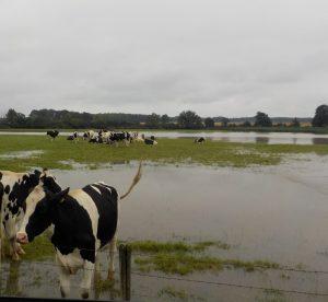 Pâture inondée Haute-Marne